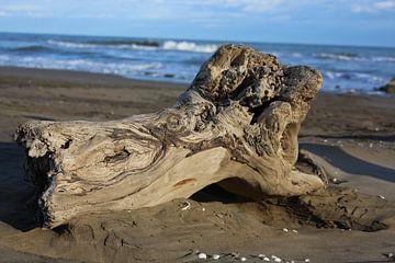 baumstumpf auf strand von marijke servaes