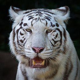Weißer Tiger van Ulrich Brodde