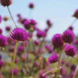 Bloemen van zwergl 0611