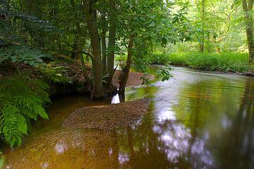 De Swalm von IJsvogels.nl - Corné van Oosterhout