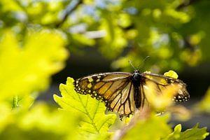 Schmetterling von Amy Verhoeven