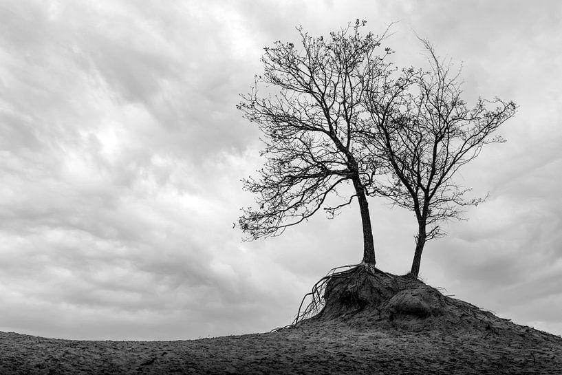 Minimalismus der Bäume als Landschaft in Schwarz-Weiß von Steven Dijkshoorn