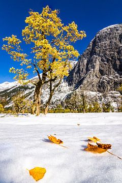 Blätter im Schnee van Thomas Froemmel