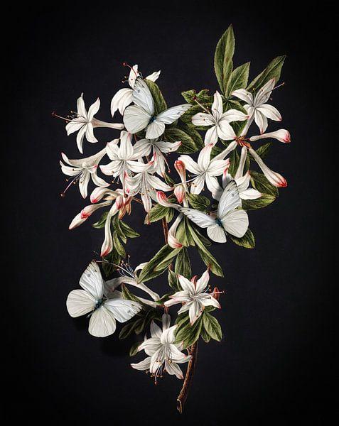 The Flowering Azalea - Butterflies Edition sur Marja van den Hurk
