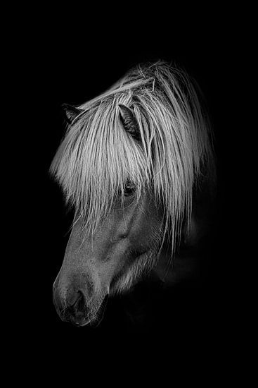 Pony in zwart wit met zwarte achtergrond