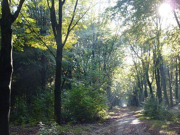 Bomen met zonlicht von Ad Steenbergen