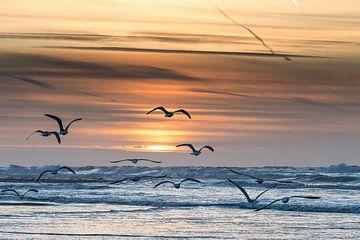 Möwen fliegen dem Sonnenuntergang entgegen von Rik Verslype