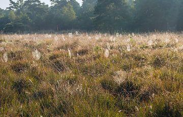Bedauwde spinnenwebben in het veld van Ruud Morijn