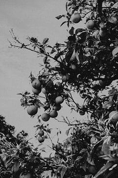 Sinaasappelbomen in de stad, Faro Portugal van Manon Visser