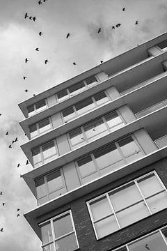 Gebouw en vogels van Wouter Bos