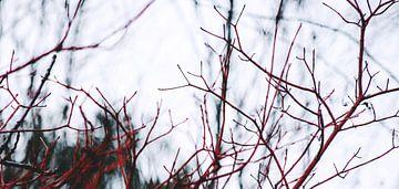 Crimson Neophyte van Insolitus Fotografie