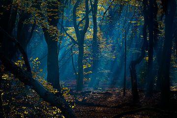 bos in blauw, het vroege licht