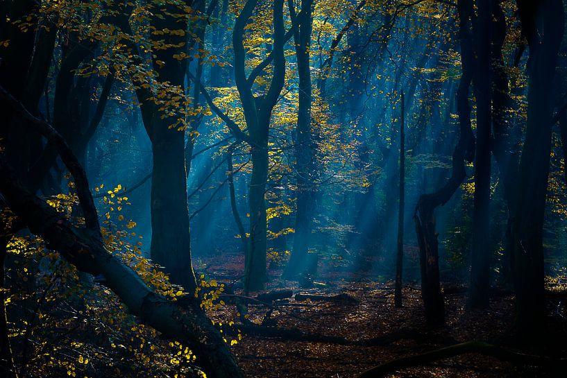 bos in blauw, het vroege licht van Rigo Meens