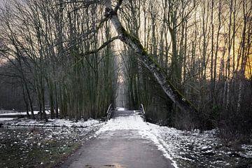 gevallen boom van Karin vanBijleveltFotografie