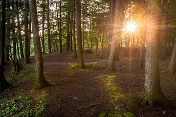 Quebec forest van