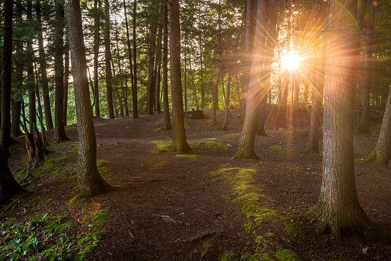 Quebec forest van Frederik van der Veer