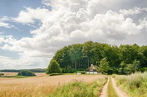 Een korenveld een landweggetje en een boerderij