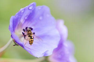 Paarse bloem met wesp en druppels van Esther van Lottum-Heringa
