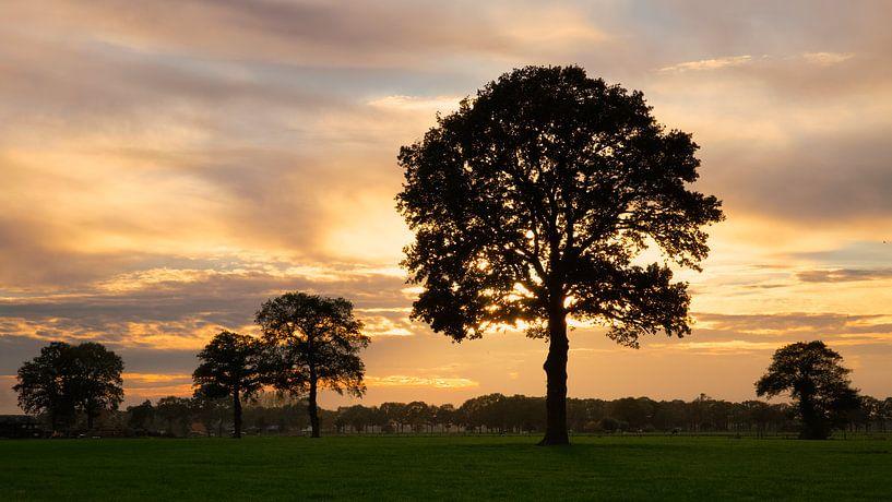 Veluws polderlandschap van Sran Vld Fotografie