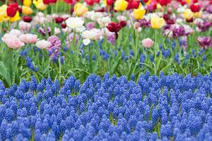Flowerfield in Keukenhof, the Netherlands