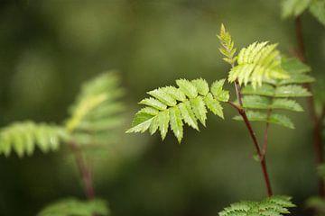 groen plantje in het bos van Kristof Ven