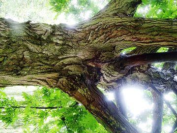 Tree Magic 138 van MoArt (Maurice Heuts)