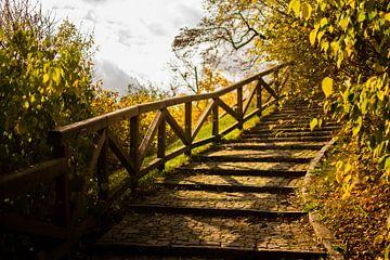 Trap omhoog in Praagse herfst met kleuren geel  en groen, overschaduwd met bladeren van Dorus Marchal