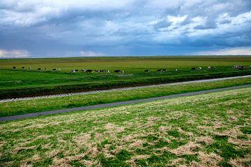 Buitendijks grazen in Carel Coenraadpolder van Jan Sportel Photography