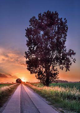 Ländliche Landschaft mit Baum in der Nähe einer schmalen Straße bei Sonnenuntergang von Tony Vingerhoets