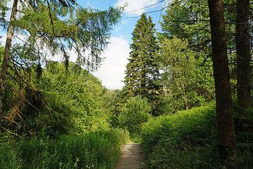 Waldweg von Babetts Bildergalerie