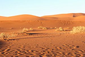 Verstild landschap in de woestijn,  Sossusvlei, Namibie