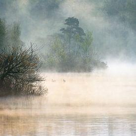 Morning Mist von jowan iven