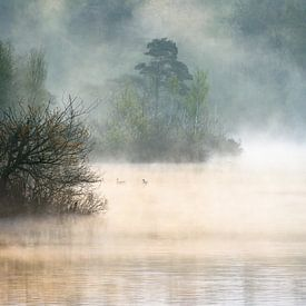 Morning Mist van jowan iven