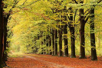 Herbstliches Licht von Marjo Snellenburg