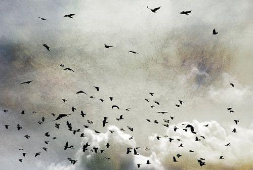 Wings van