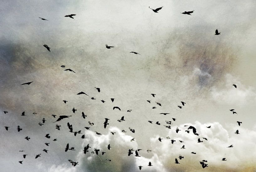 Wings von Jenny de Groot