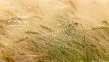 Buigzame gerst (1) von Beeld en Poëzie