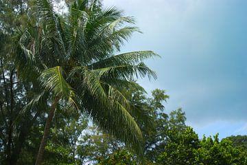 Palmboom st Johns Island in Singapoer van Atelier Liesjes