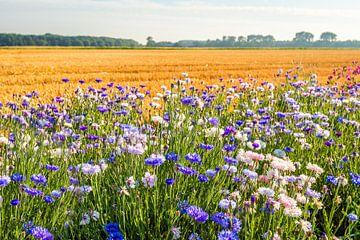 Kleurrijke akkerrand langs een graan stoppelveld van Ruud Morijn