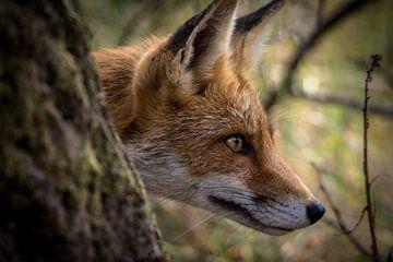 Fuchs von Christien van der Veen