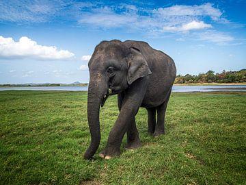 Olifant die dichtbij een meer loopt, in Sri Lanka - van Ruurd Dankloff