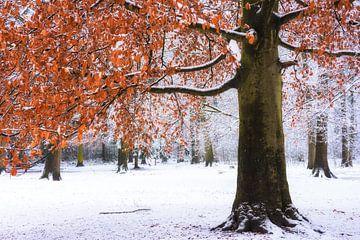 Tussen winter en herfst van Fabrizio Micciche