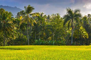 Reisfeld Java Indonesien von Julian Oude Maatman