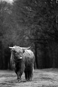 Schotse Hooglander zwart-wit van Christien Hoekstra