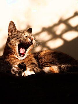 Sprudelnde Katze im Sonnenlicht von Patruschka Hetterschij