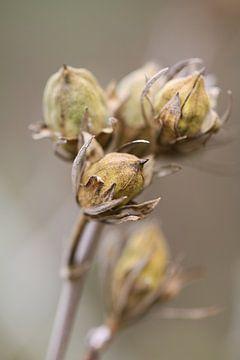 Uitgebloeide tak bloemen van Lily Ploeg