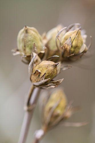 Uitgebloeide tak bloemen van