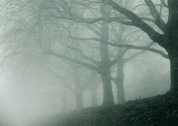 fading trees