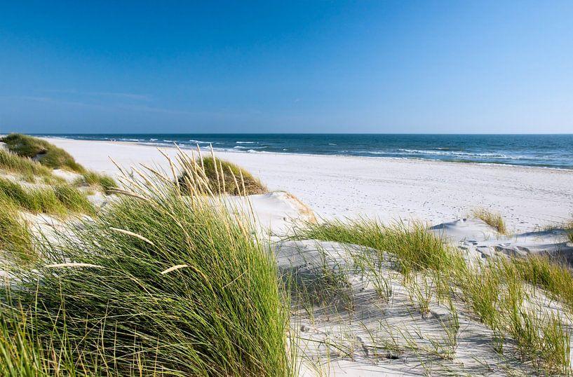 Nordsee - Dünenlandschaft  von Reiner Würz / RWFotoArt