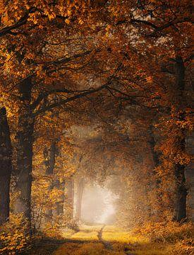 Schilderachtige herfst van Rob Visser